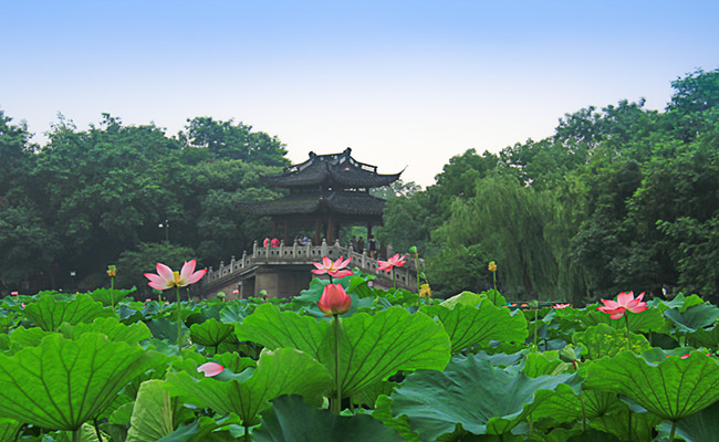 hangzhou_lotus_summer6.jpg