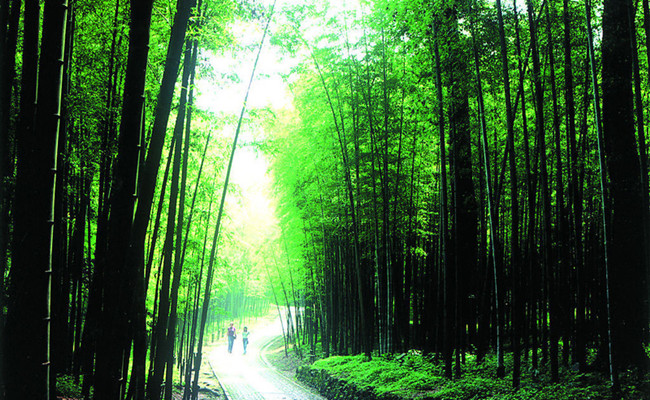 Bamboo_lined_Path_at_Yunqi_hangzhou.jpg