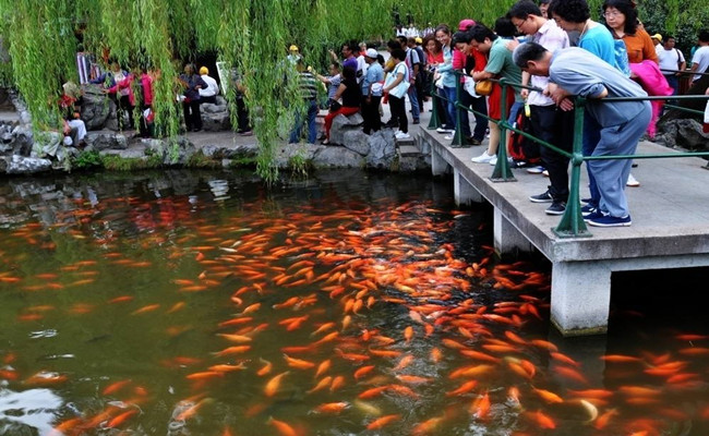 Fish_Viewing_at_the_Flower_Pond_05.jpg