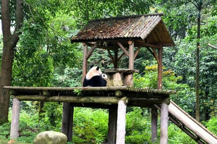 Bifengxia_Panda_Base_1.jpg